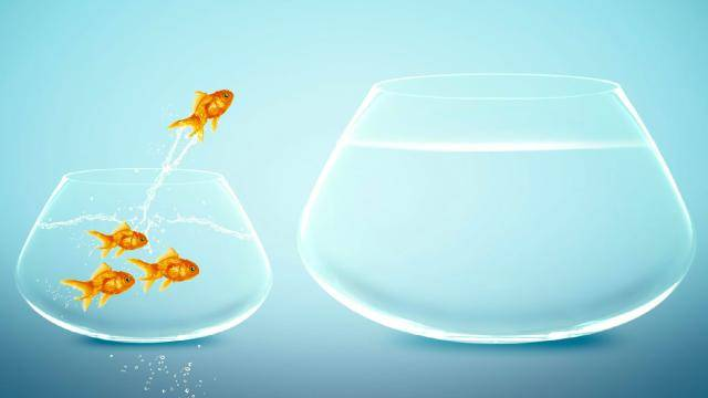A small fishbowl with 4 fish, one jumping from the bowl to a bigger bowl.